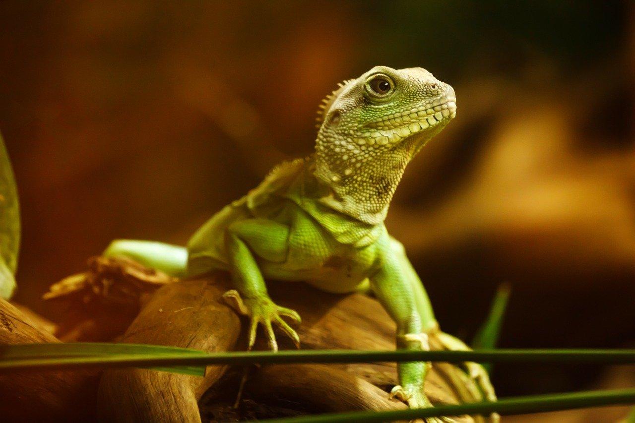 Quel matériel utilisé pour manipuler les reptiles sans risque